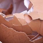 Jajčne lupine za psa so odličen vir kalcija!