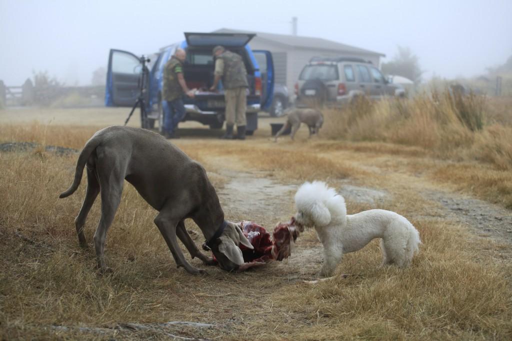 Surova hrana za pse je ena izmed debat, ki pogosto meša štrene.