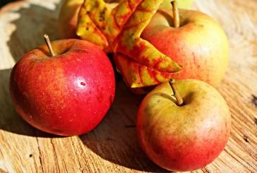 Jabolčni kis za psa: 5 načinov uporabe