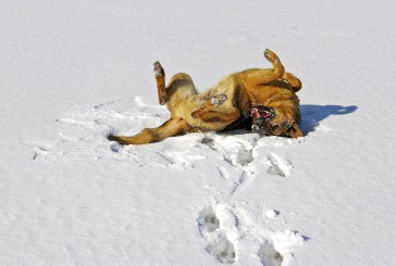 Pasje blazinice in ostale zimske tegobe