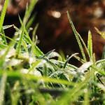 Pasje alergije na travo: kako jih preprečiti in omiliti?