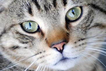 Kaj pa…mačke?