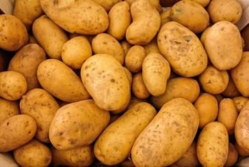 Ali pes lahko je krompir?