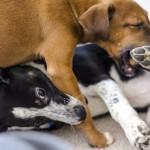 Kako ravnati, ko naletiš na nevzgojenega pasjega lastnika?