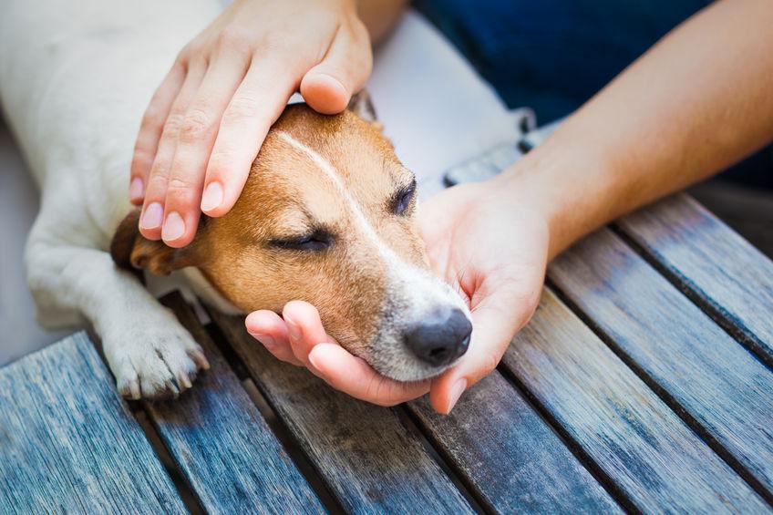 masaža za psa