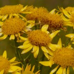 Homeopatija za pse: osnove