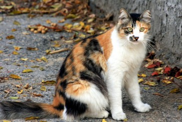 Prepoved hranjenja živali v Ljubljani