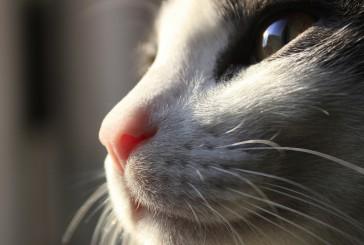 Hrana za mačke: ker jih…cenite!