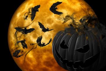 Pasji piškoti za halloween