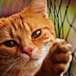 Tavrin za mačke