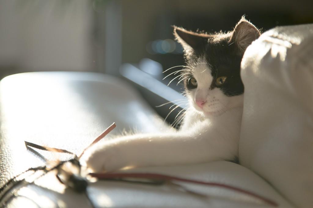 debelost in gibanje pri mačkah