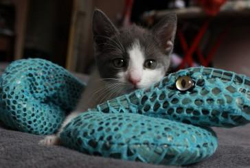Zakaj je pomembno, da se z mačko ukvarjamo?