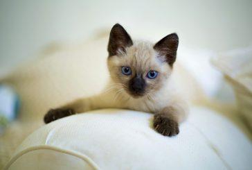 Mi bi pa imeli mačjega mladiča!