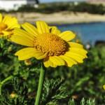 Artritis pri psih in zelišča – 2. del