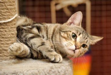 Praskalnik za mačke – popoln vodič, kako izbrati pravega