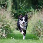 Gibanje = življenje! Energijska osteopatija za živali