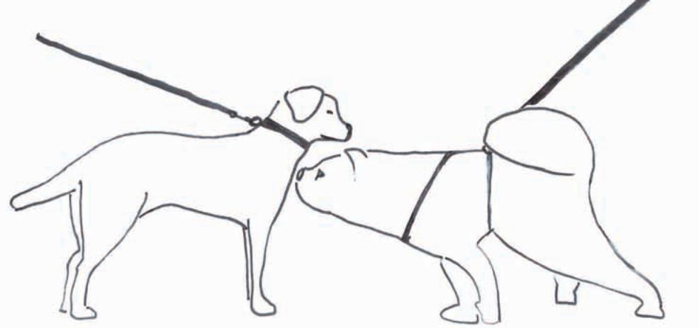 srečanje s psom