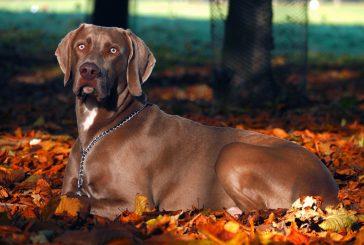 Mentalne vaje za psa: 3 ideje