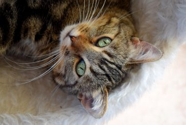 Mačje stranišče in vse, kar morate vedeti o tem