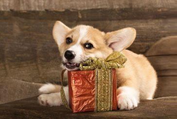 Darila za psa: nekaj idej, ki so dejansko uporabne! (1. del)