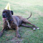 Zabava za pasji rojstni dan