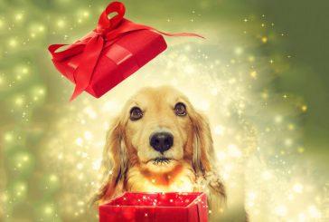 Darila za psa: 5 idej za razvajanje pasje duše (2. del)