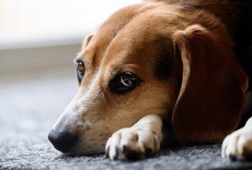 Artritis pri psih in mačkah ter akupunktura