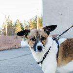 Je moj pes trmast ali preprosto ne zmore?