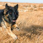 Glukozamin za pse: ga tvoj pes potrebuje ali ne?