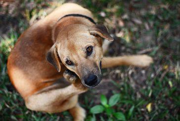 """Pasje alergije: kako jih ublažimo """"od znotraj""""?"""