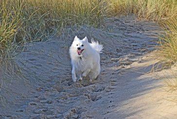Vnetje sklepov pri psih in naravne rešitve