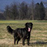 Kam s psom v Ljubljani?