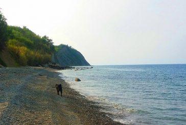 Plaža Bele skale – ideja za izlet s psom