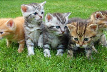 Mačji mladiči za oddajo: kje, kako in kaj NE
