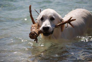 »Morska« driska – driska po kopanju v morju