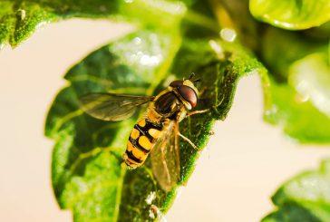 Pik čebele pri psu: kako ukrepati?
