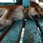 Tudi šepanje pri psih zahteva individualno obravnavo