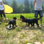 Pasja šola ZA PSA – psom zares prijazna šola