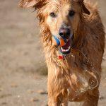 Oprema za pse: kaj potrebujete in kaj lahko počaka?