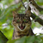 10 tipičnih znakov, ki kažejo na stres pri mački