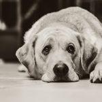 7 znakov pri psih in mačkah, ki lahko kažejo na artritis