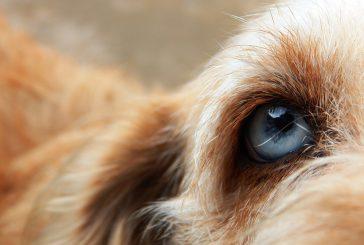 Odgovor na večno vprašanje »Kako vidijo psi?«