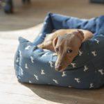 Zakaj vaš pes šepa?