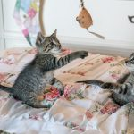 Kako notranjim mačkam popestriti okolje?