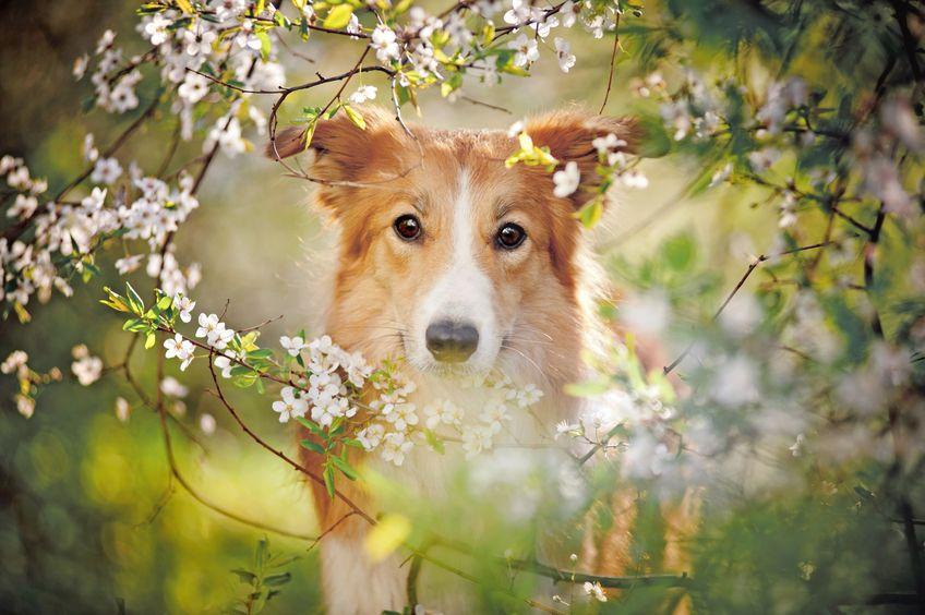 zravljenje psa z matičnimi celicami