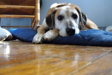 Dodatki za sklepe: kaj izbrati za vašega psa?