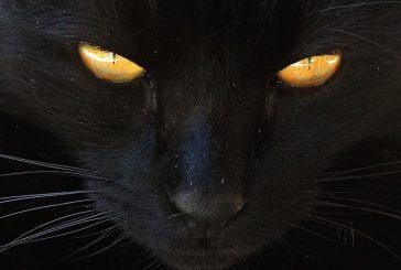 Črne mačke in vraževerja na drugih koncih sveta