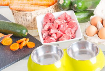 Namig za popestritev pasjega obroka in boost zdravja