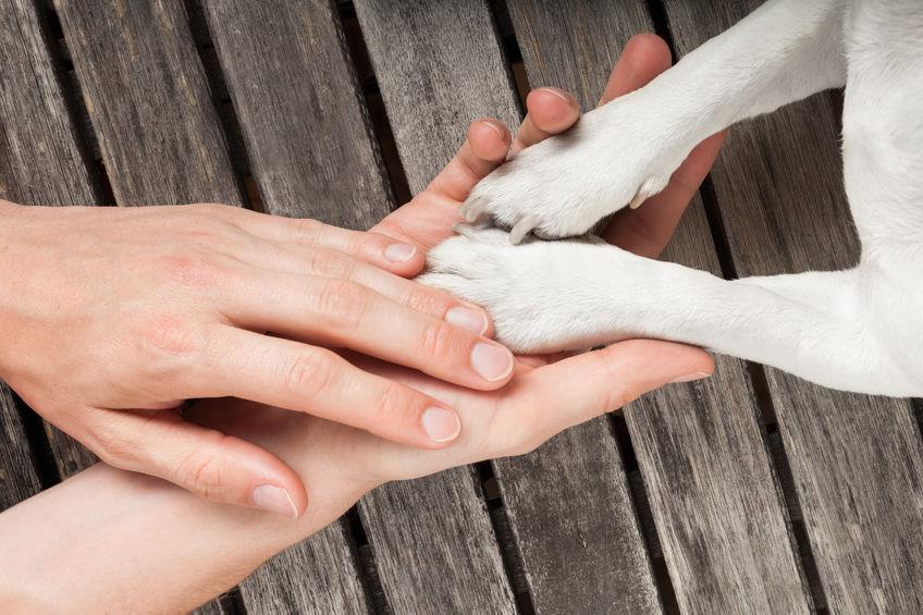 akupresura za pse delavnica