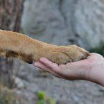 Akupresura za živali: kaj in kako?